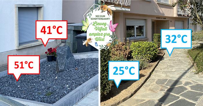 Schottergärten erhitzen das Stadtklima!