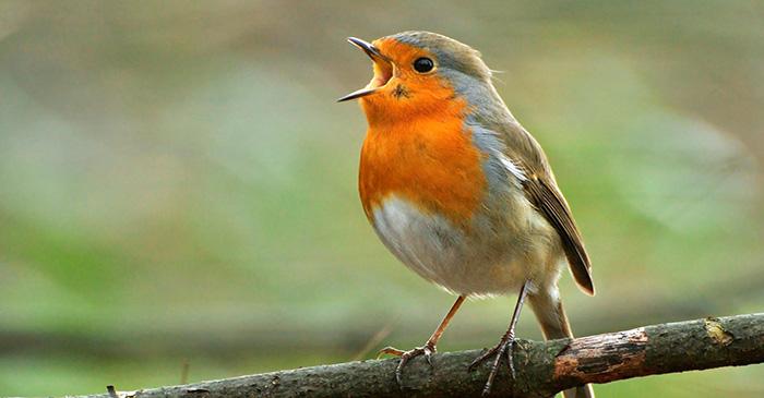 La nature dans les parages de notre domicile : Faut-il nourrir les oiseaux en hiver  ?