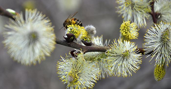 « A voller Bléi » trotz Regen ? Wie gehen Insekten mit dem Regen um und welche Pflanzen mögen es nass?